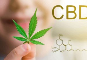 i will Do Viral Promotion For Your Cbd Oil Website To get 1000 Real Traffic